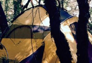 kamperen met het team, bedrijfsuitje kamperen, team in de buitenlucht